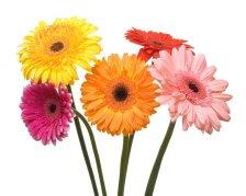 five-flowers